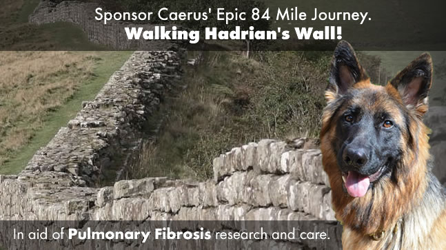hadrians wall dog walk